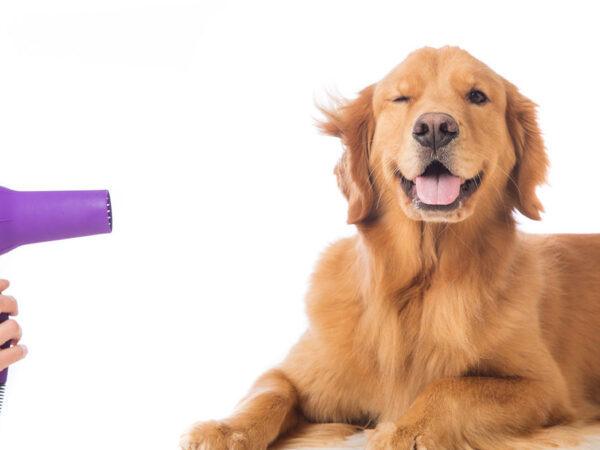 PET SALON: A NEW TO CHALLENGE THE BUSINESS WORLD